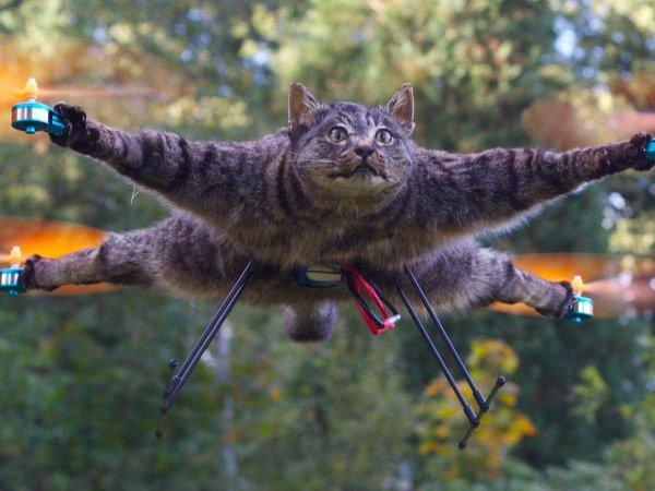 Отодрал шкуру! В Москве «застукали» пришельца свежевавшего дворовых кошек