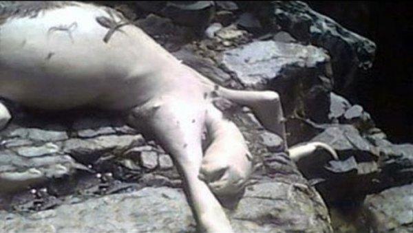 «Пожрал всю рыбу»: Лупоглазого трупокрыса нашли на берегу Волги