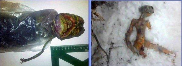 Иркутск убил пришельца. Россияне нашли в снегу труп инопланетянина