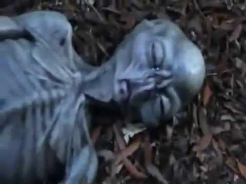 Мертвого пришельца нашли после дождя в Приморье