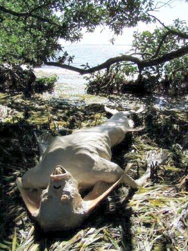 «Рыболюд откинул жабры»: Утопца с другой планеты выбросило на берег в Ленинградской области