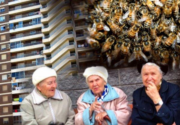 Отопительный сезон и улей в подарок: В Москве пчёлы-мутанты выселили пенсионерку из квартиры