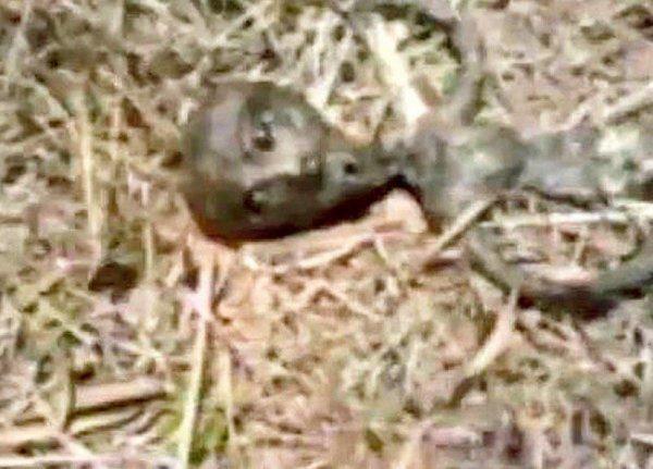 Мертвый гуманоид. Жительница Воронежа нашла на помойке труп новорожденного пришельца