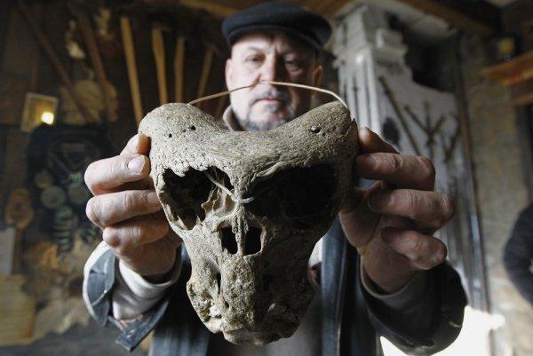 Чернобыльский Свинотавр: Череп жуткого существа обнаружили в лесу под Брянском