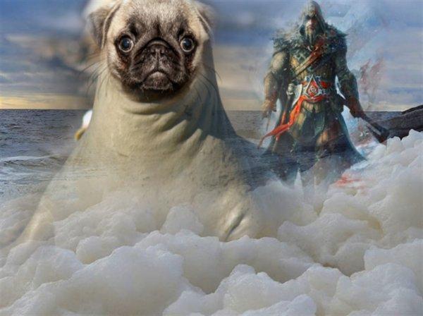 Питомец нордов: Древнего «пса» выбросило из Карского моря