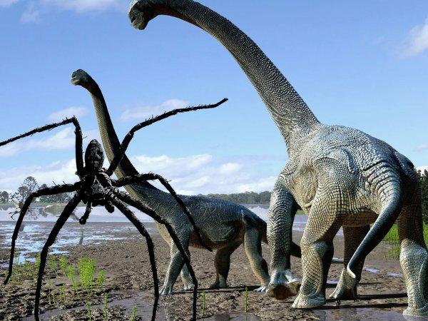 Паук Юрского периода: 1,5-метровый гигант «сожрал» курицу в Литве