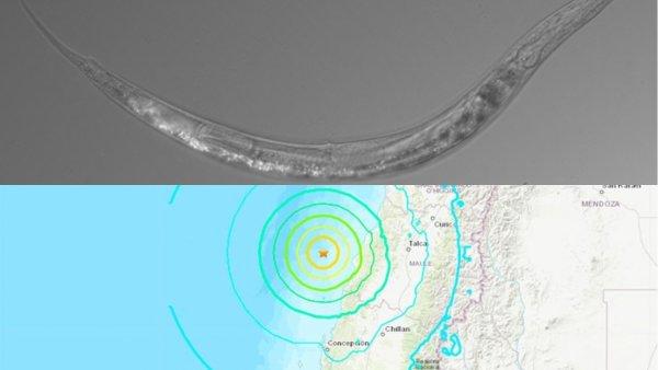 Бессмертные и смертельно ядовитые: Землетрясение в Чили вернуло к жизни червей-мутантов