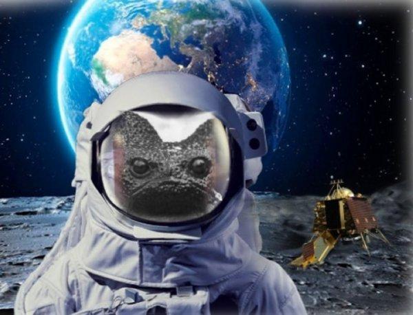 «Пучеглазые жаборылы»: В Подмосковье упал спутник с пришельцами