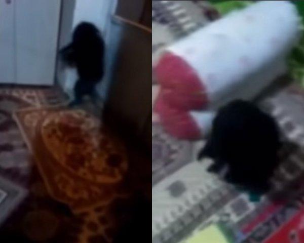 Нафаня вернулся: В Дагестане семья  усыновила  малыша-домового