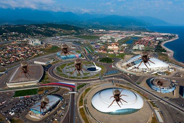 «Дихлофос не помогает»: Жители Сочи заявили о нашествии неизвестных насекомых
