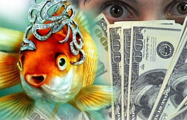Долой нищету! Рыбки в доме привлекут богатство и процветание