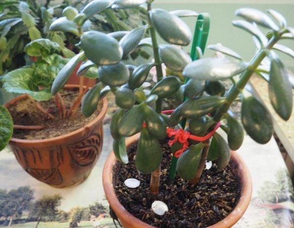 Меркурий в Скорпионе – деньги в доме: Ритуал с цветочным горшком поможет разбогатеть