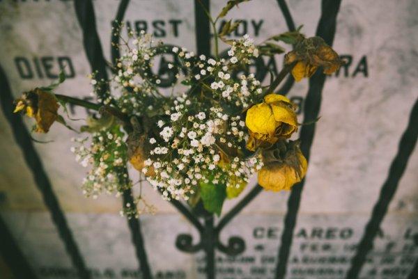 Принять цветы – удачу отпугнуть: Что нельзя делать 9 ноября