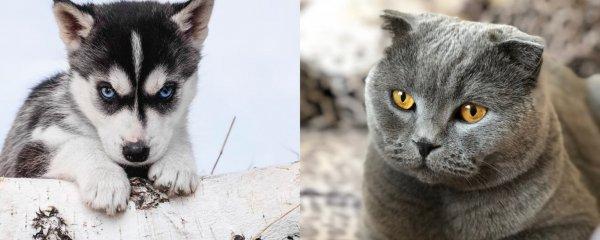 Кот или пёс во сне: Что скрывает «послание Богов» за питомцами
