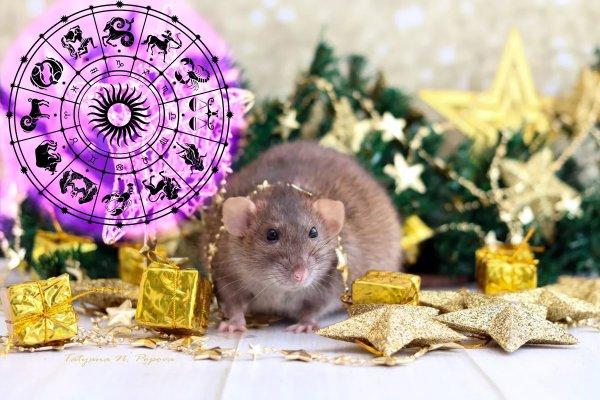 Что надеть на Новый год? Удачные цвета для Зодиаков назвала астролог