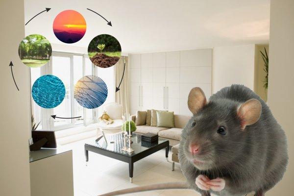 «Генералка» для Крысы: Как провести энергетическую уборку перед Новым годом