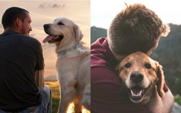 Собака-«охраняка»: Пёс поглощает болезни хозяина