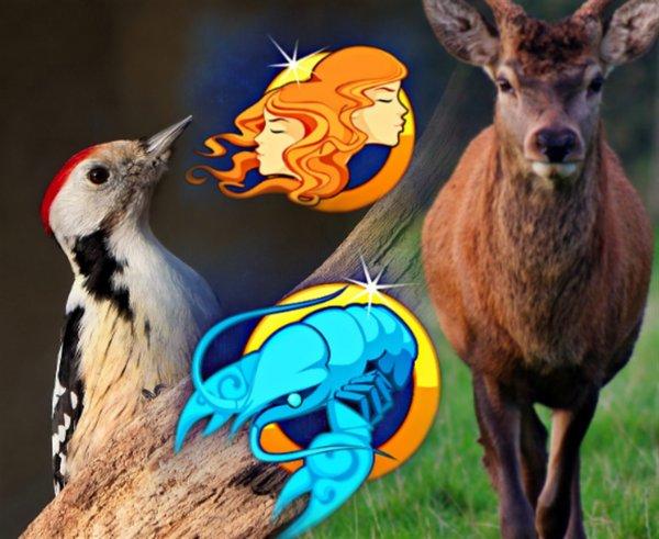 Близнецы - олени, а Раки - дятлы: Гороскоп древних раскрыл секреты всех Зодиаков