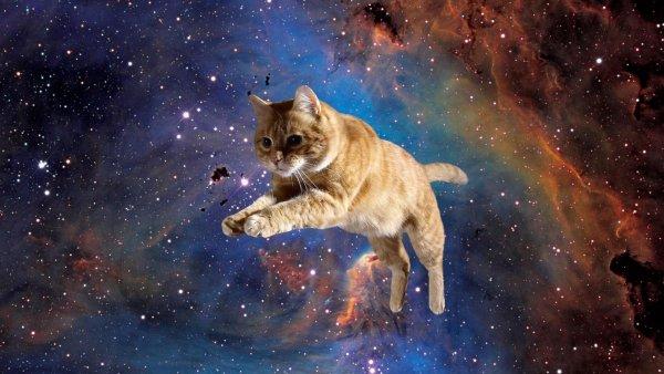 Счастливыми ножками бежим за кошками: Каким знакам зодиака нужен котик для счастья, рассказал астролог