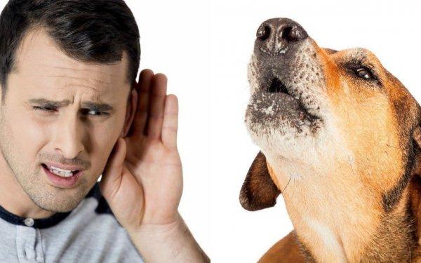 Собака скулит — к человеку приходит беда. О чем могут предупредить питомцы — эзотерик