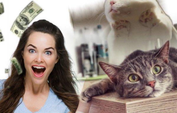 Кот на столе – счастье в семье: Странную привычку питомца раскрыл эзотерик