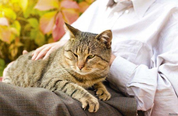 Коты вампиры и доноры. Какие питомцы забирают и отдают хозяевам энергию — эзотерик