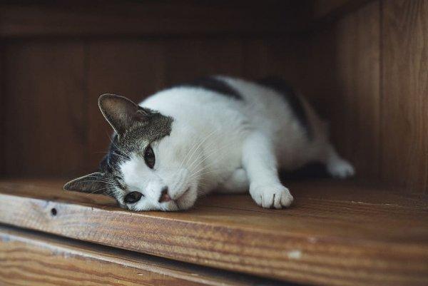 Ушки на макушке: Почему коты слышат потустороннее