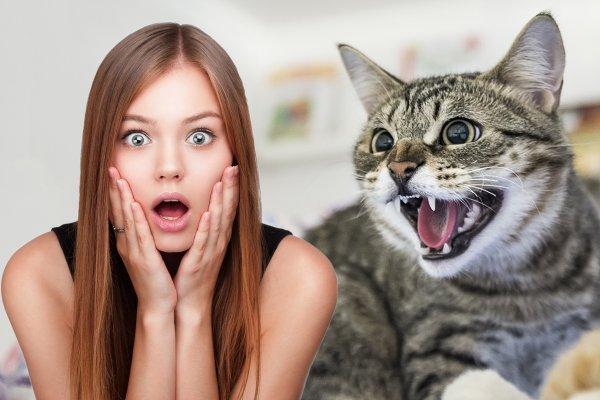 Кошка шипит — от зла защитит: О чём говорят кошачьи странности