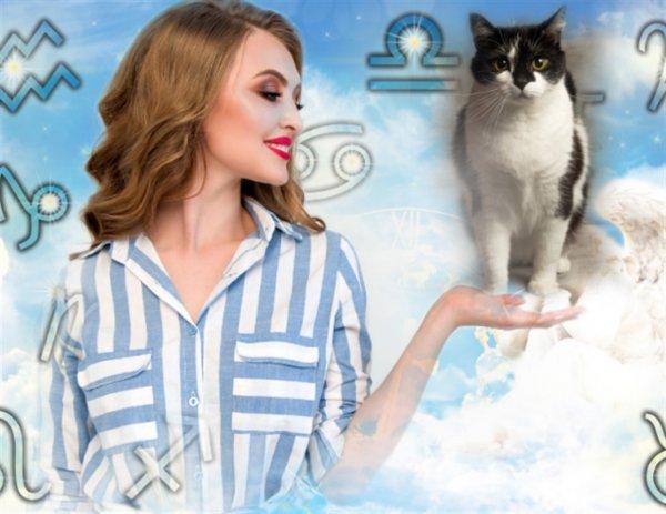 Супер-кот для счастья: Месяц появления «пушистика» вдоме укажет наего миссию