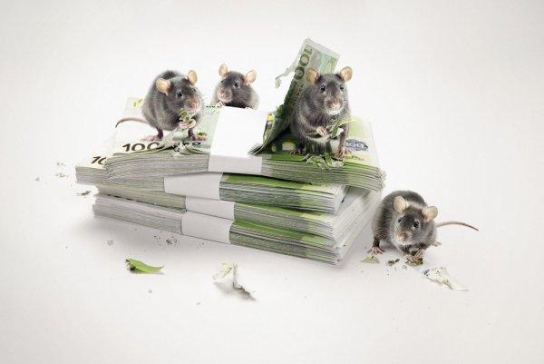 Крыса зарплату утащила: Каким знакам стоит крепче держаться за кошелек в этом году