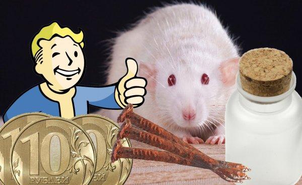Крысе платим «солёной» монетой: Как привлечь деньги и удачу на 2020 год