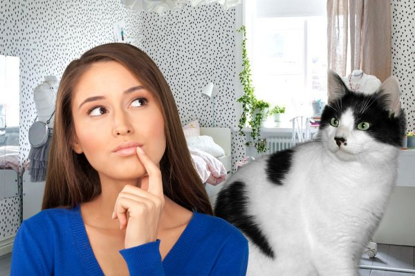 «Родинка» на счастье: В чём особенность кошек с пятном под носиком