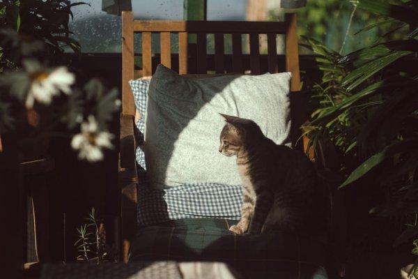 Кошка — глава семьи: о чем говорит животное, когда спит у головы