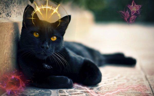«Чёрная кошка дорогу перебежала»: Эзотерики рассказали какие чудеса принесёт животное