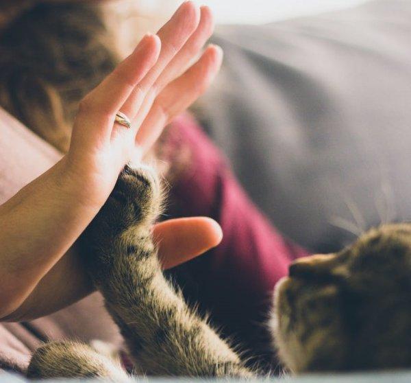 Котята играются - деньги прибавляются: Что означают кошачьи шалости