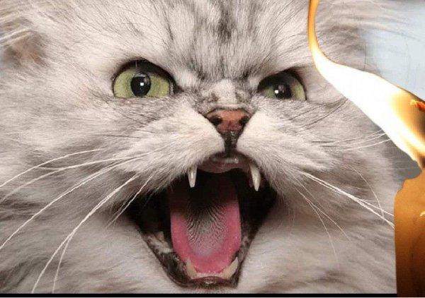 «Шипят и лают - нечисть знают»: Эзотерик рассказал, почему домашние любимцы могут агрессивно реагировать на посторонних