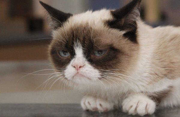 Плачет котик – прижали хвостик: Почему важно просить прощения у кота