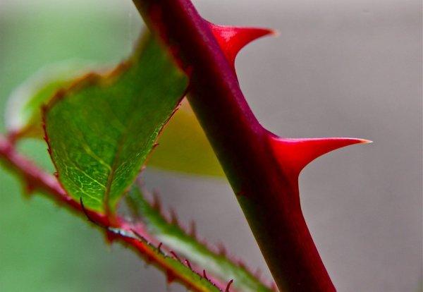 Только не колись: Как «неправильные» цветы навредят 14 февраля – эзотерик