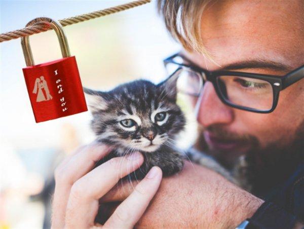 Пушистый Купидон: Кот сблизит Близнецы и Рыбы в выходные