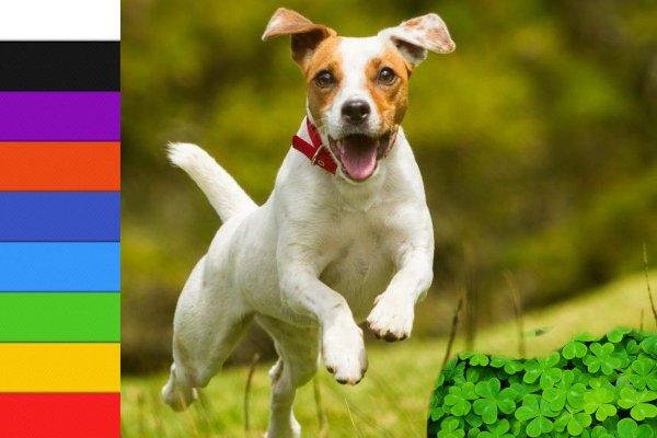 Собака белая — душа смелая: Как цвет живого меняет ауру в доме