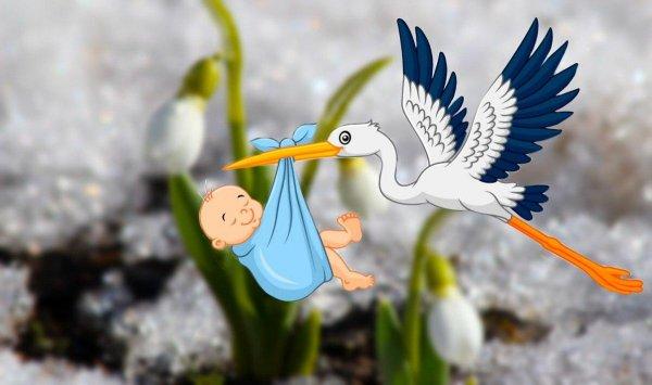 Аист точно прилетит: Эзотерик рассказал о высоких шансах зачатия в первый месяц весны