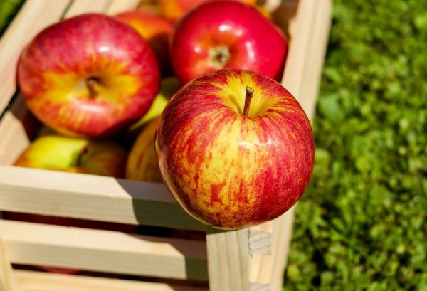 Любовь под защитой: Яблоки сохранят отношения в начале весны