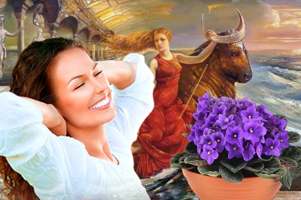Фиалка на 8 Марта: Чем цветок осчастливит Тельца?