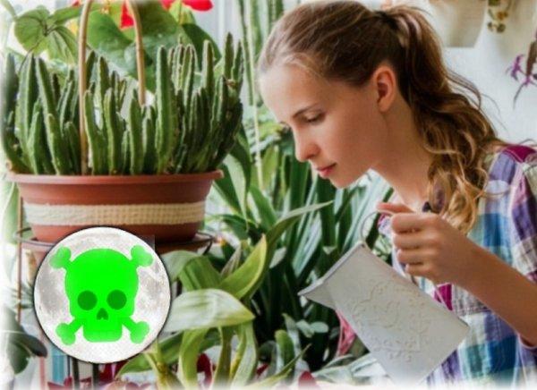 Вода-убийца или почему опасно поливать растения 16 марта