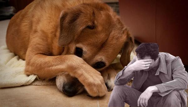 Человек собаке друг. Почему верный товарищ в доме прячет нос