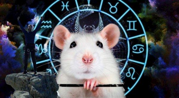 Год Крысы в помощь: ТОП зодиаков-завоевателей по Восточному гороскопу