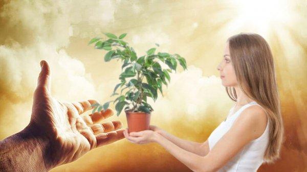 Грехопадений день – 27 марта помощь придёт от комнатных растений