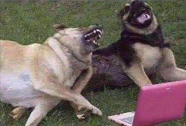 Собаки-предсказатели: Чего ждать, если животное портит имущество