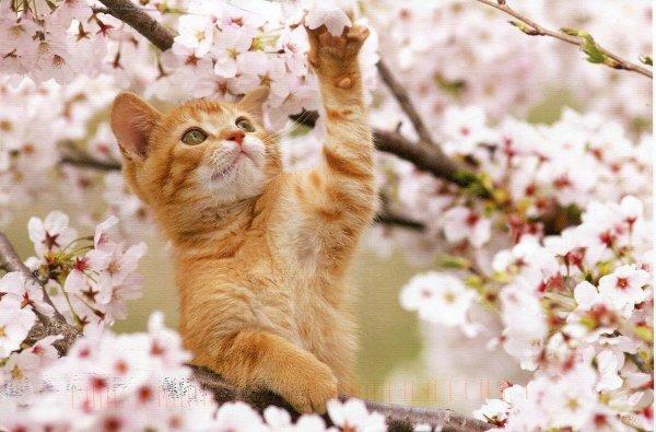 Весной коты вестники судьбы. Почему стоит присмотреться к поведению питомца