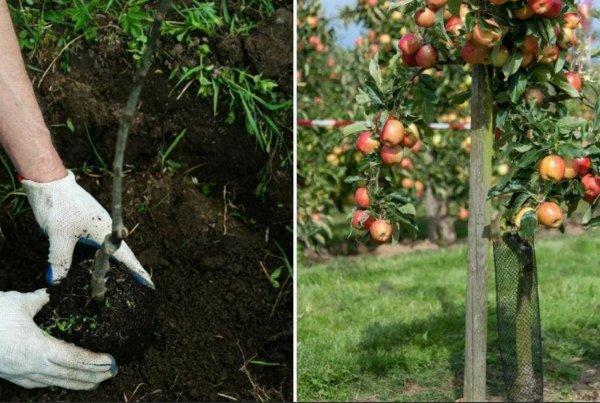 Урожая завались: Чем заняться в огороде в Страстной понедельник